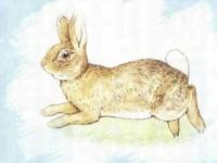 一只凶猛的坏兔子
