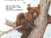 贪睡的小熊(组图)